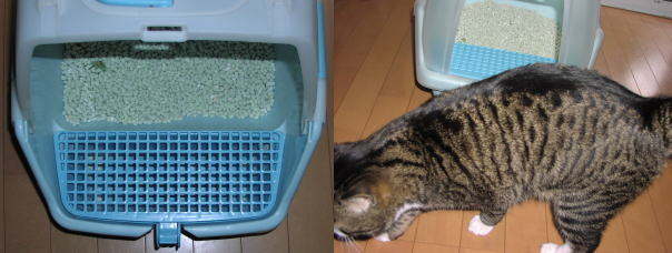 掃除のしやすいネコトイレとオス猫